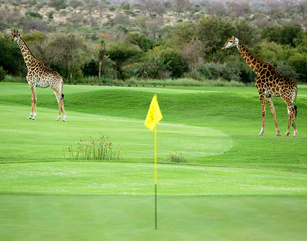 Leopard Creek
